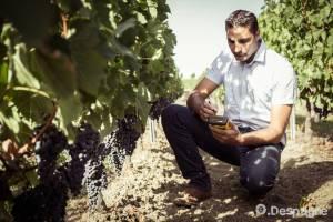 Anthony Appollot prenant des mesures dans le vignoble