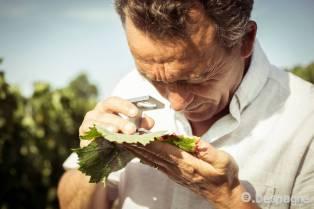 Richard Vanrenterghem: expert phytosanitaire de l'observation parasitaire à la décision de traiter (conseil, modélisation, réglementation), jusqu'à la maîtrise du résidu dans la bouteille (analyses)