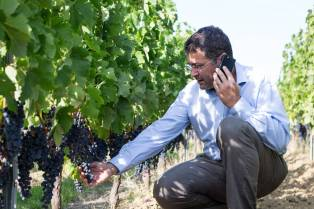 Yannick Reyrel: expérience dans tous les domaines liés à l'exploitation d'une propriété viticole