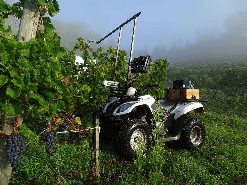 Viticulture de précision:  Cartographie Green Seeker et applicationsconcrètes